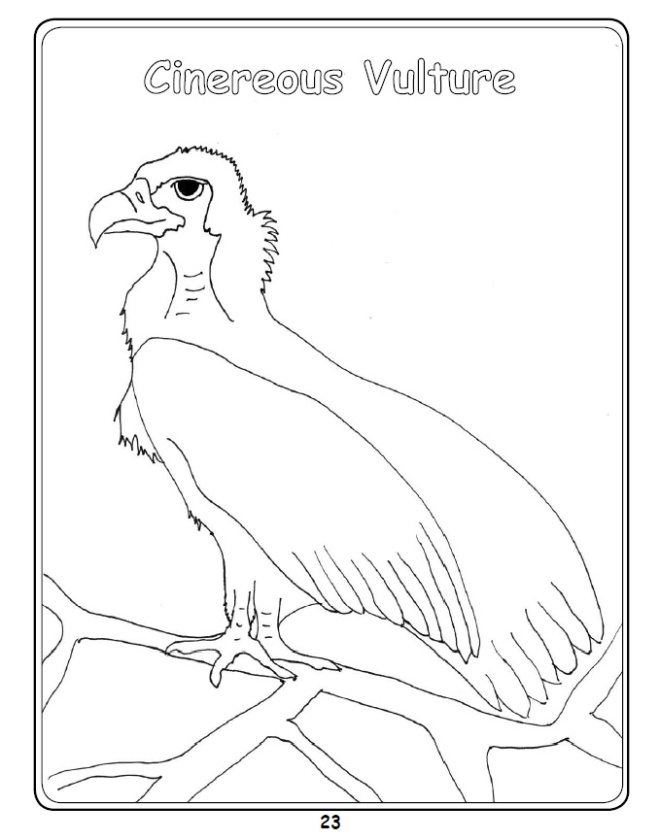 Cinereous Vulture Colouring In Picture